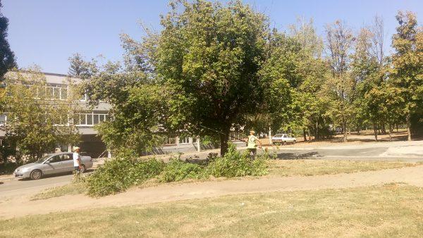 Незаконна обрізка дерев - що робити?