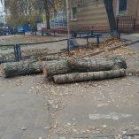 Горсовет признал, что пилит деревья без разрешительных документов