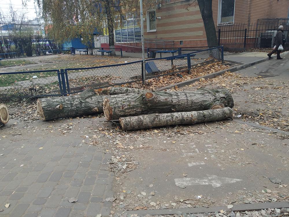 Горсовет пилит деревья без разрешительных документов