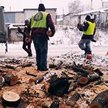 Как проверить законность вырубки деревьев?